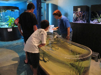A volunteer introduces some children to the touch tank.