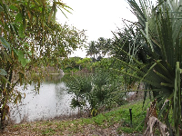 Tropical plants beside the lake.