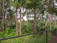 The forest in the Abacoa Greenway.