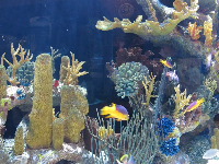 Colorful fish and coral.