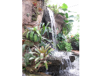 Waterfall in the tropical rainforest inside the Conservatory.