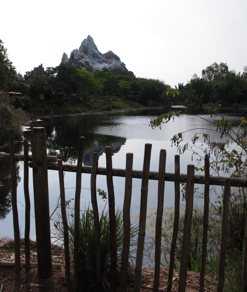 Expedition Everest ride in the distance.