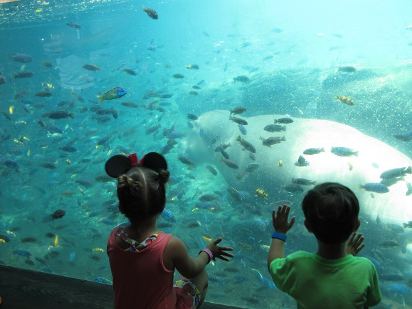 Two kids enjoy watching the hippo underwater.