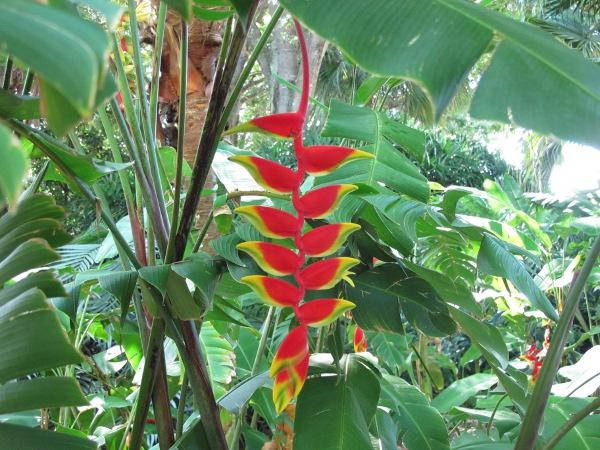Heathcote Botanical Gardens: Heathcote Botanical Gardens, Fort Pierce