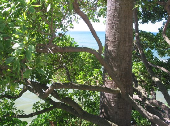 I love to look down through trees at the sea!