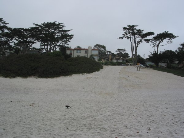 Looking back up the steep white beach at the beachhouses and fantastic trees. A fun spot for kids to roll down.