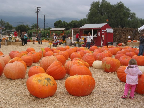 Lane Farms Pumpkin Patch, Santa Barbara California
