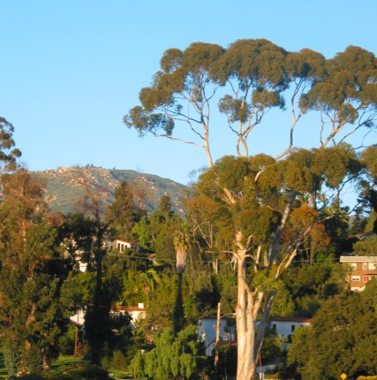 View of mountains and eucalyptus trees from Plaza Rubio, at sunset around Christmastime.