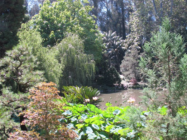 Serenity and layers of green at the Japanese garden.