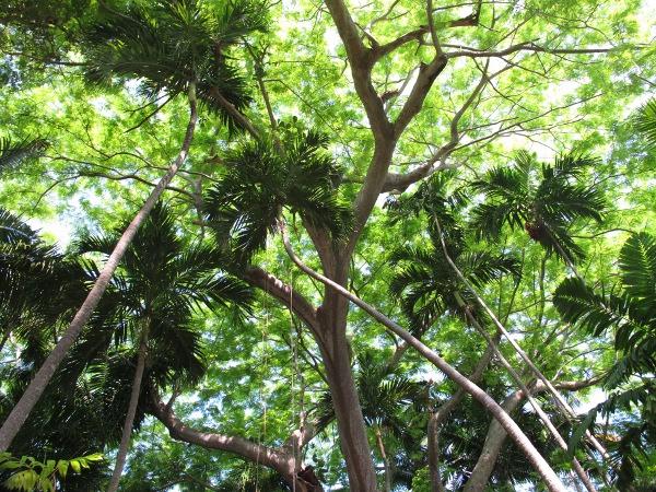 Fairchild Tropical Botanic Garden Miami Fun Maps