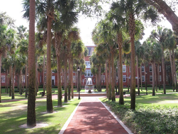 Row of palms and fountain.