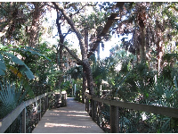 Boardwalk under jungle vines and canopy walk.