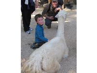A boy and his dad take delight in the petting zoo.