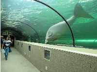 I LOVED the part of the aquarium called Dugong Island.