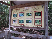 Plaque on the nature trail describing the medicinal uses of Florida plants.