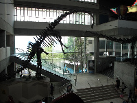 Dinosaur replica in the lobby.