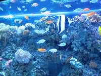 Fish on a tropical reef.