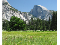 View of half dome from a meadow.