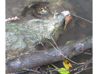 A happy frog in the stream.