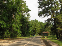 The forested road that leads through Florida Caverns State Park to the spring.