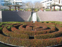 The maze of floating azalea hedges in the sunken gardens, wintertime.