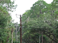 Spanish moss even grows on the telephone wires on River Ridge Road!