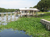Lily pads and docks on St. Johns River.