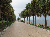 The promenade is lined with cabbage palm trees.