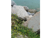 Wildflowers and rocks beside the promenade.