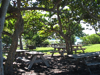 Picnic tables under thick shade.