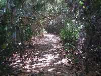 Beach hammock trail, a very short circle.
