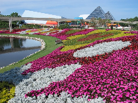 There are flowers everywhere from March to May at Epcot!