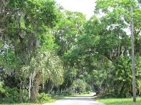 Lush trees on a side street off Lake Sybelia Rd.