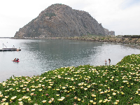 Flowers, glassy water, and Morro Rock, and children playing at the beach below.