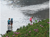 Children playing in the water while a sea otter rests in a bed of sea grass (top right).