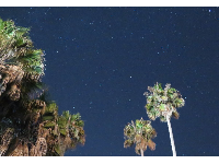 Stars and palm trees. Hendry's is a nice place to come at night.