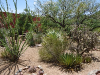 Cactus garden outside the museum.
