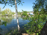 The lake and trees.