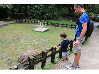 A child and father check out the tortoise.
