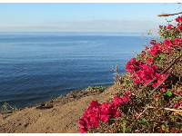 Dark pink bougainvillea always looks amazing by the sea.