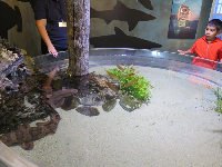 A boy seems a little hesitant to touch the sharks in the touch tank!