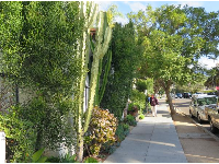 East Cota Street sidewalk and an abundance of plants.
