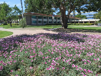 Flowers in front of the freshman dorms.