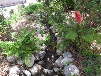 The stream and ferns.