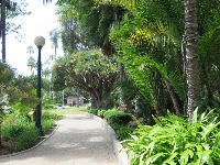 Walkway past lush tropical plants.