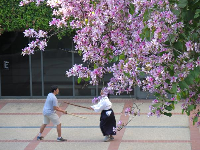 Practicing martial arts outside the Fowler Museum, under the blossoming trees.
