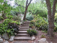 Steps in the garden.
