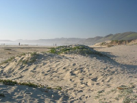 Fantastic sand-dunes accessed via a short trail from the butterfly preserve and North Beach campground.