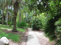 Path through palm area.