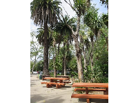Picnic tables and palms.